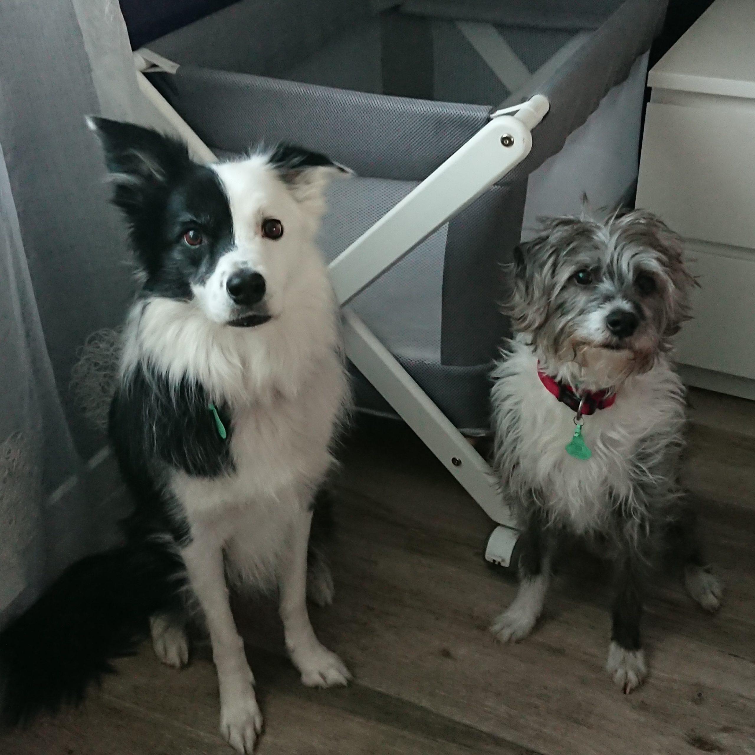 perros y la cuna del bebé