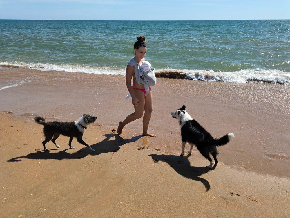 primeros días juntos perros y niños