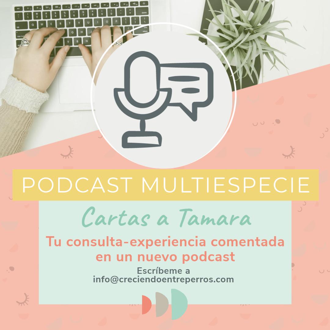 podcast educacion canina cartas a tamara perros y bebés