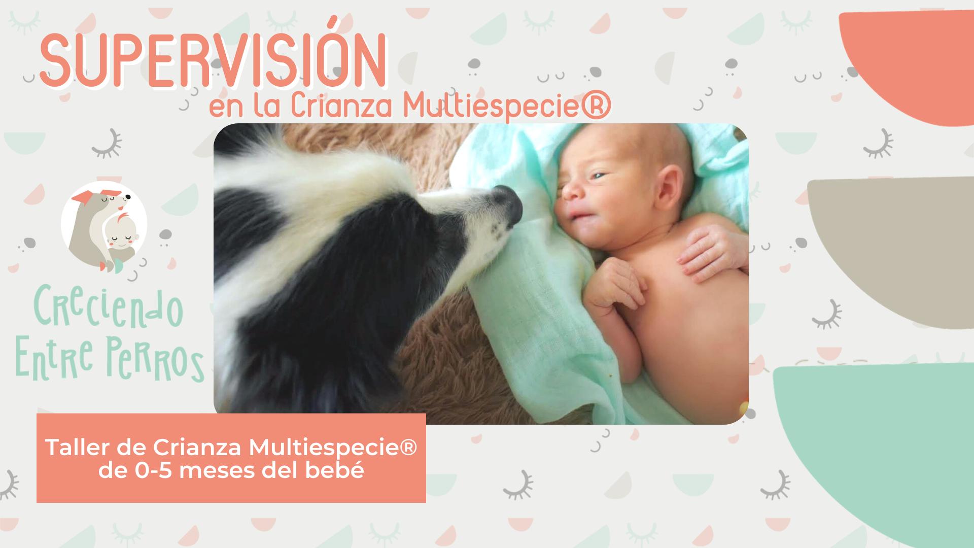 convivencia perros y bebés niños recien nacidos creciendo entre perros crianza multiespecie