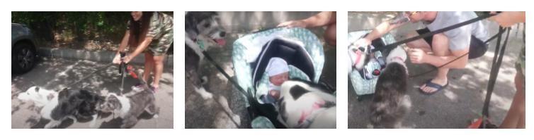 cómo hacer la presentación entre perro y recién nacido