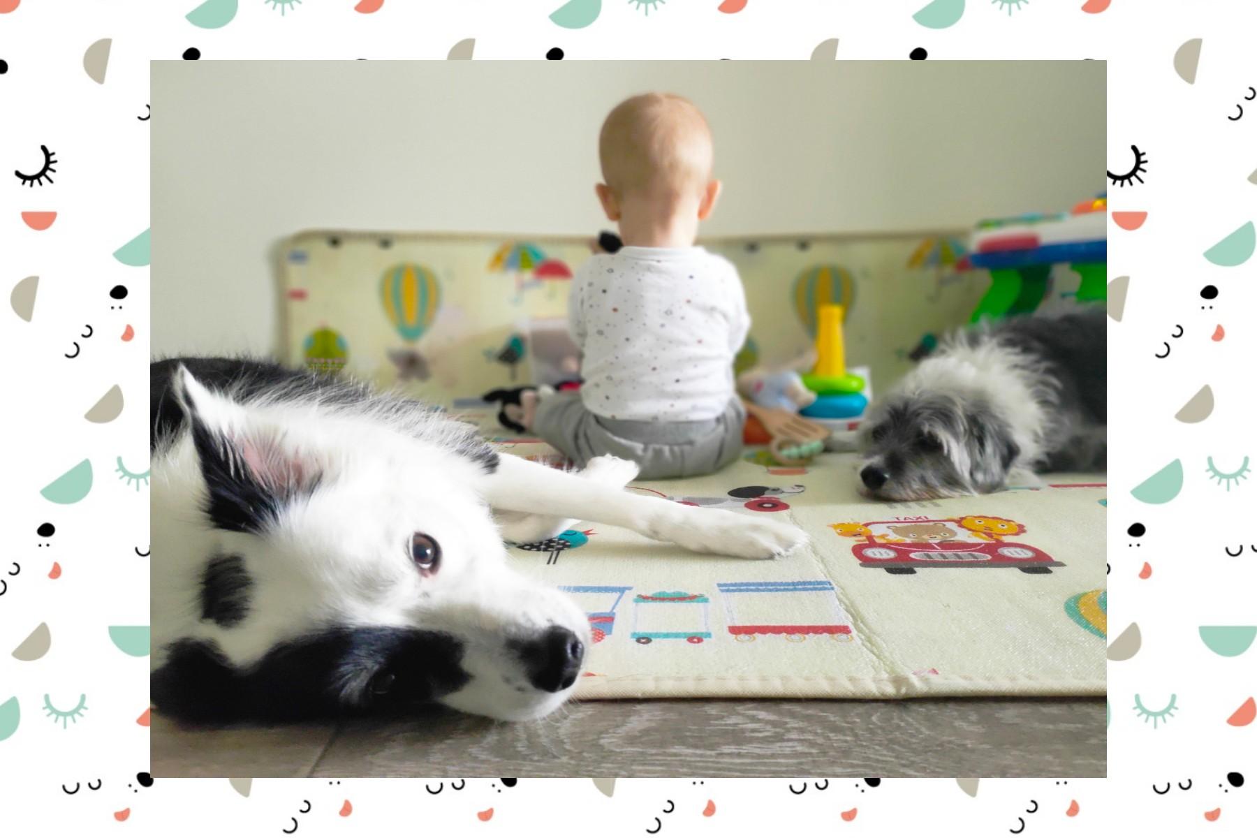 10 mejores razas para convivir con niños creciendo entre perros