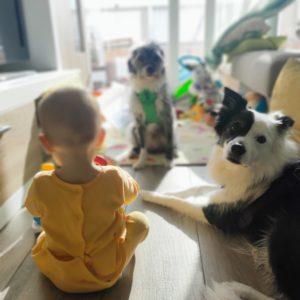juego crianza multiespecie juego entre perros y niños familia creciendo entre perros y niños
