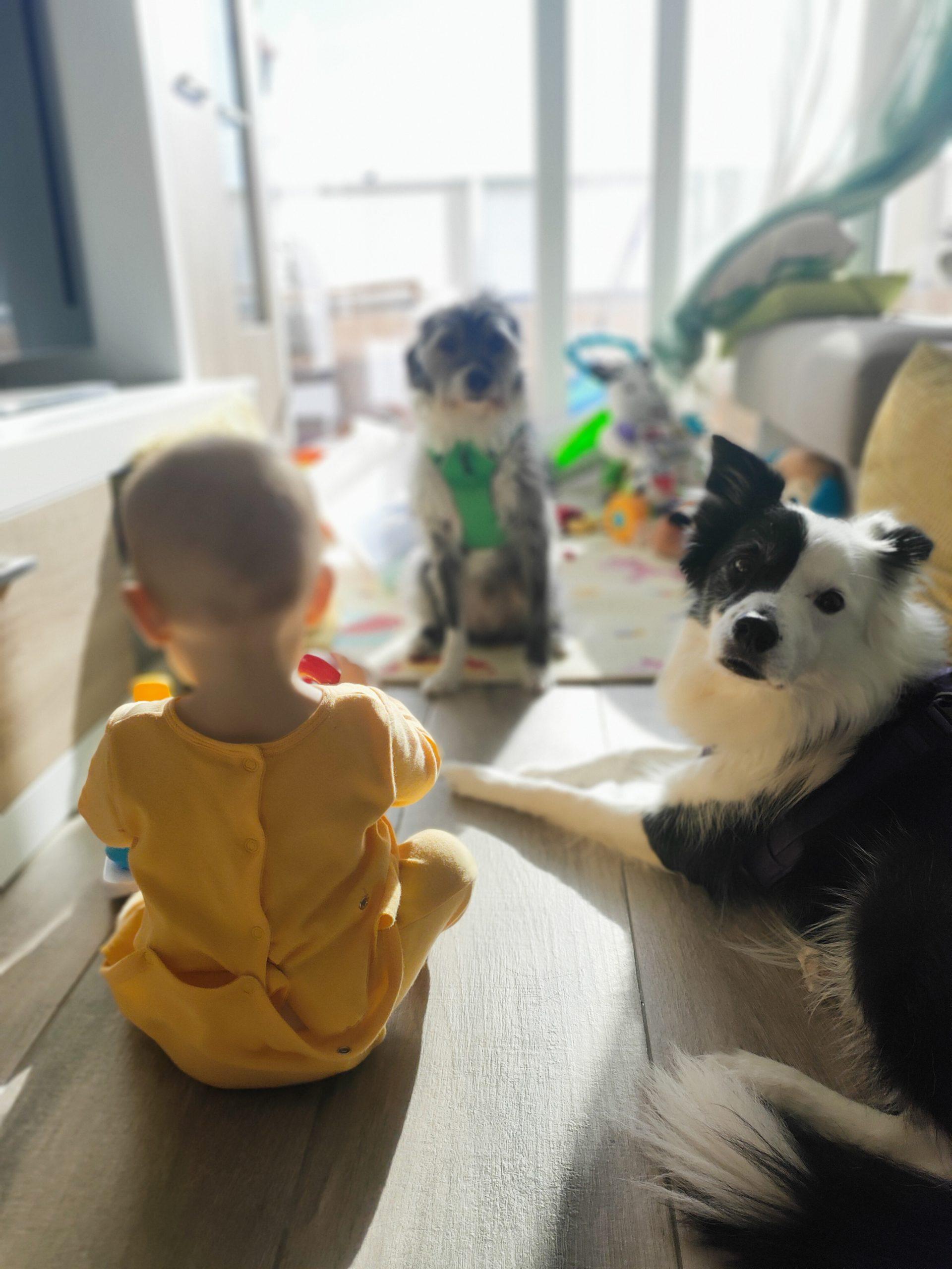 crianza multiespecie familia creciendo entre perros y niños