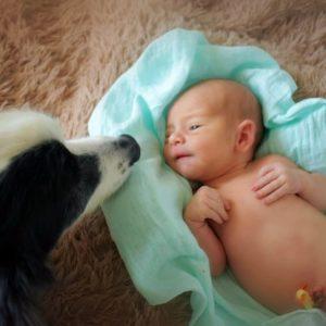 perro conoce a bebé