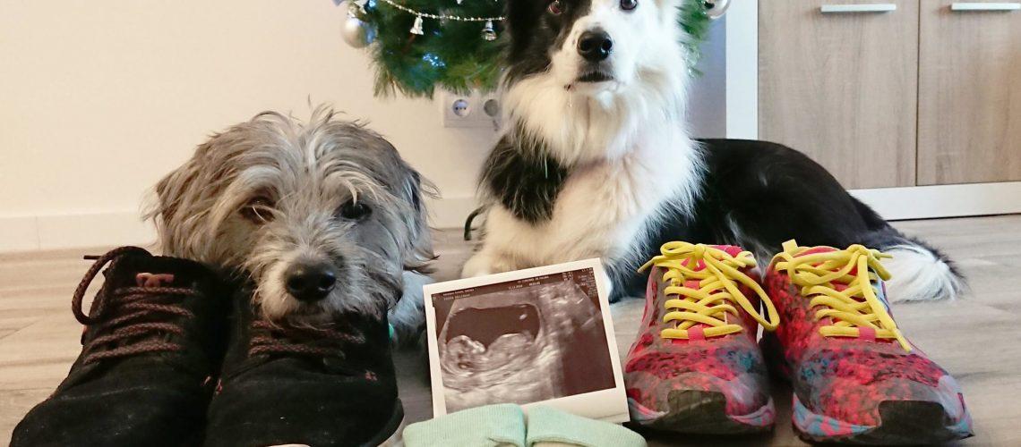embarazada y con perro creciendo entre perros tamara hernan