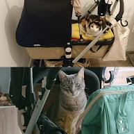 gatos descansan en carro y cuco del bebé