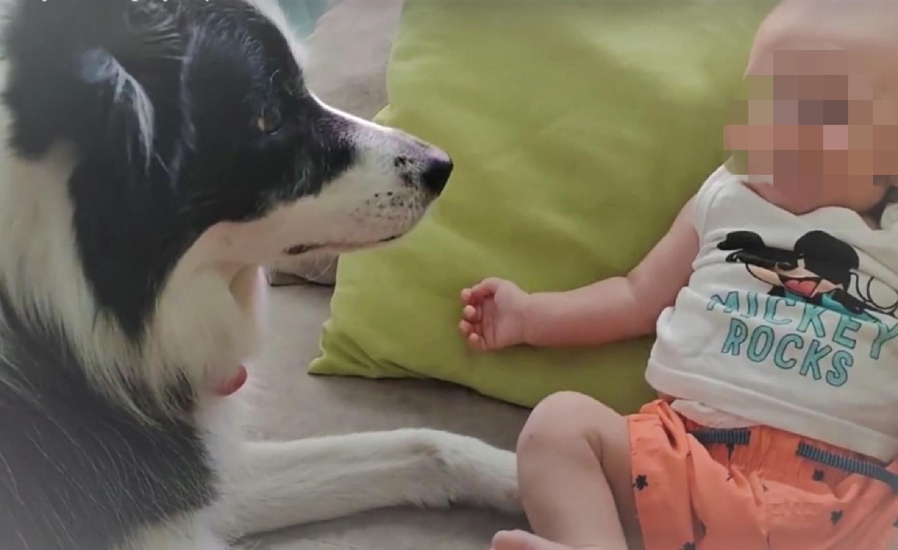 hipervigilancia perro bebe proteccion recursos