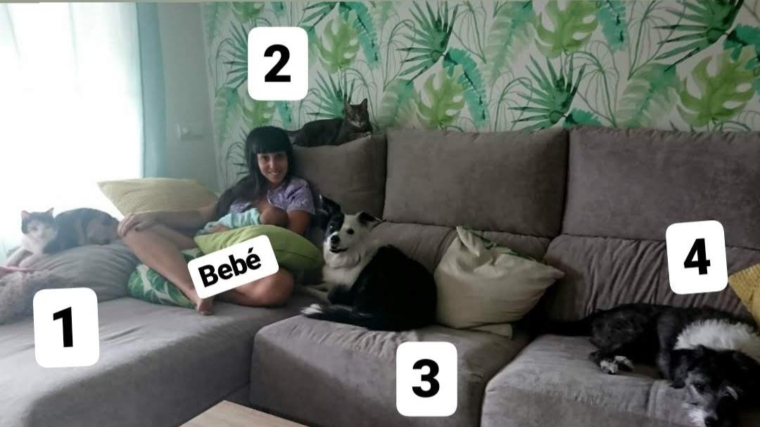 lactancia materna con bebé entre perros y gatos