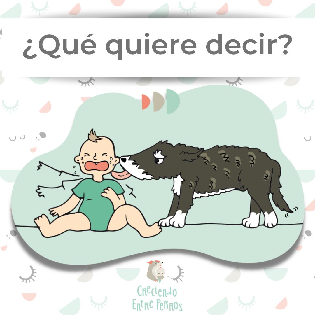 qué significa cuando el perro lame al bebé