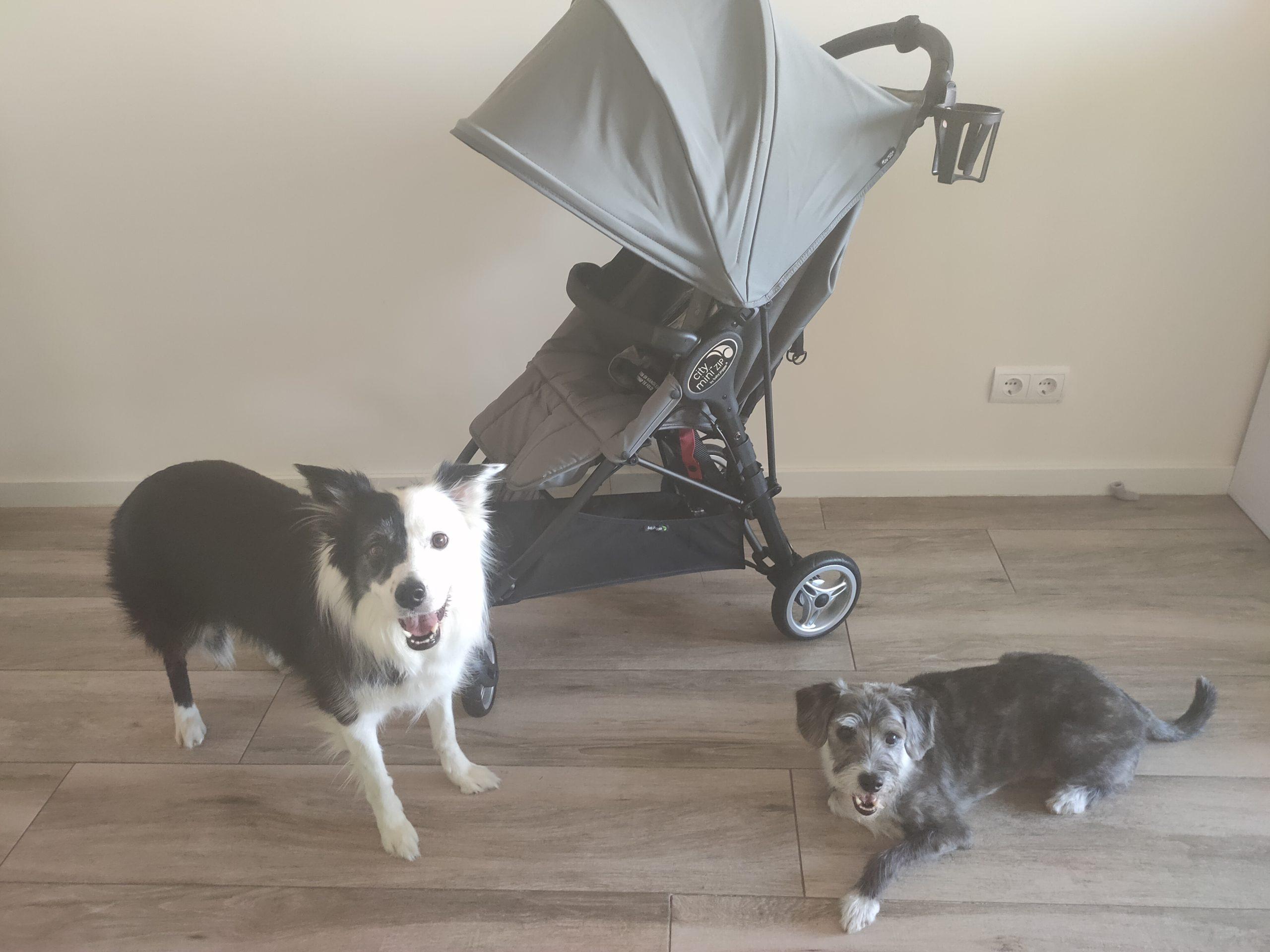 aprende a positivizar el carro del bebé con tu perro
