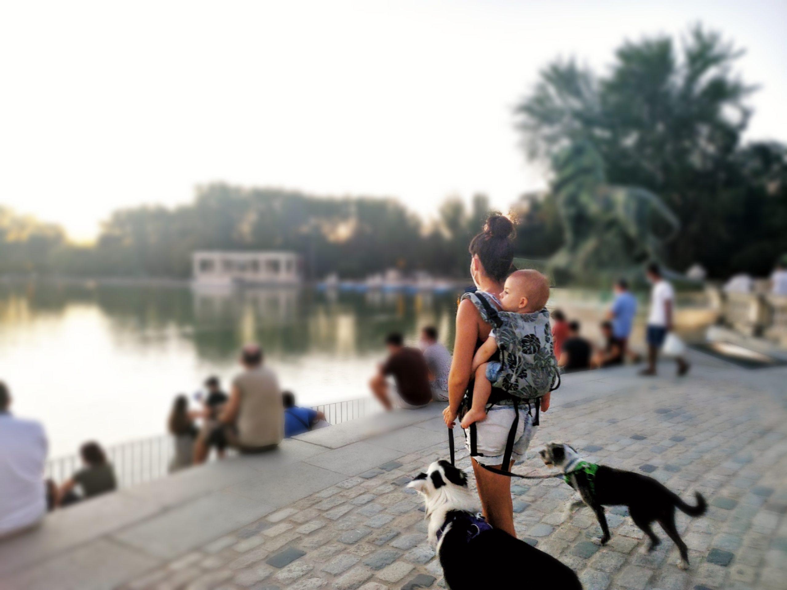 paseando con perros y porteando bebé creciendo entre perros crianza multiespecie
