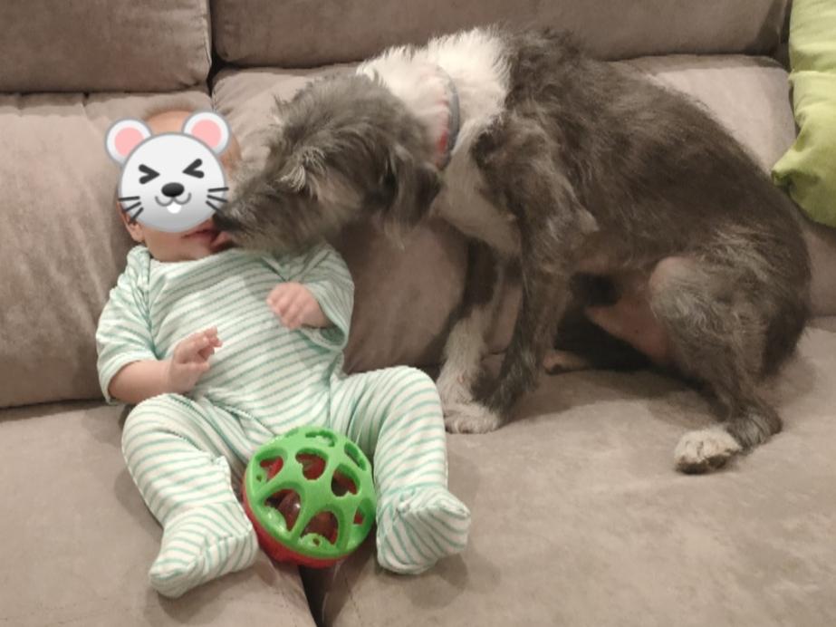 perro y bebé en el sofá