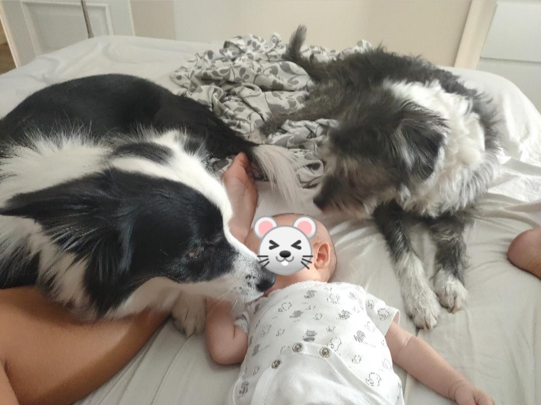 perros y bebé en la cama creciendo etre perros