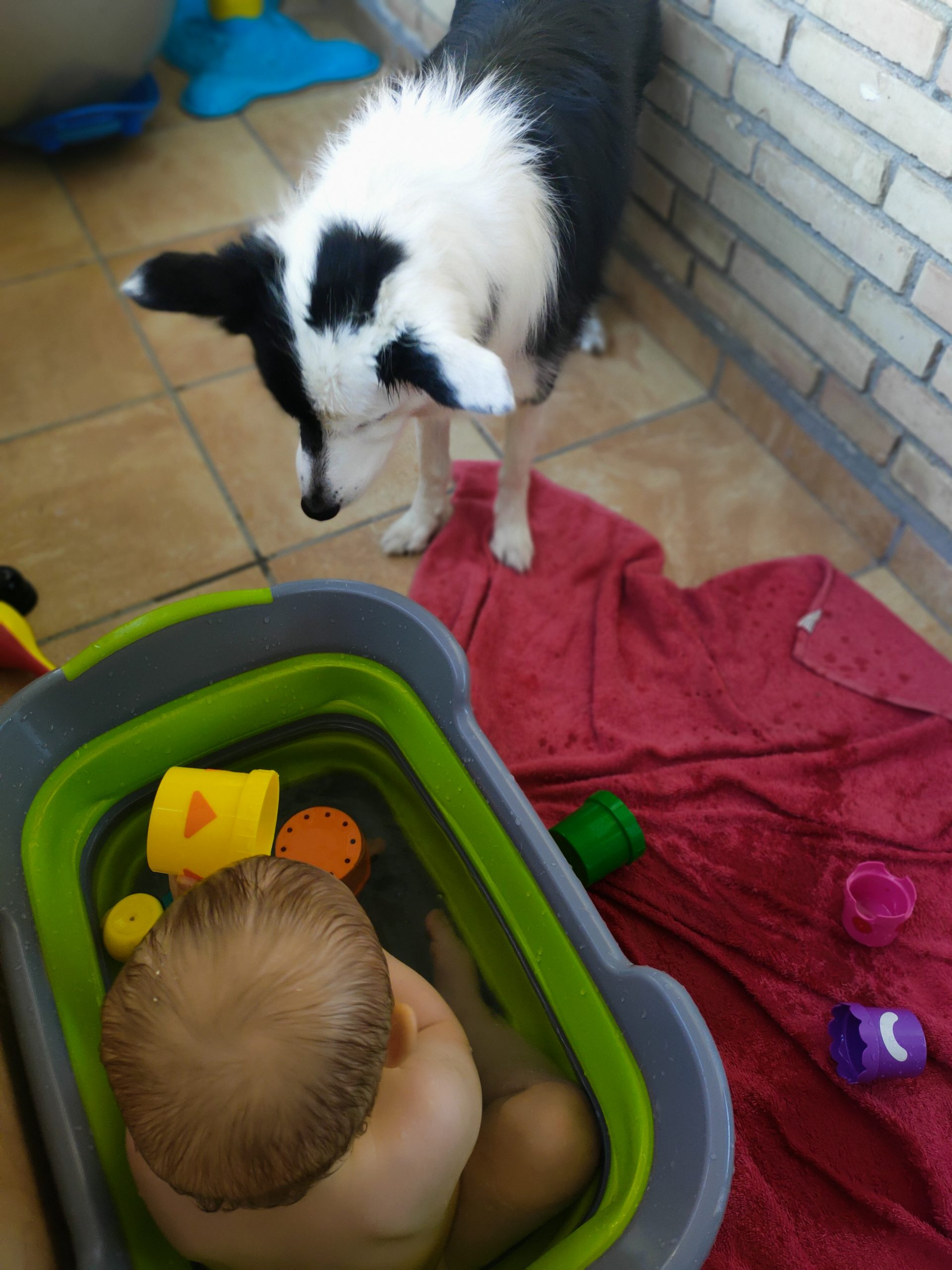 perro se come pato goma bebé