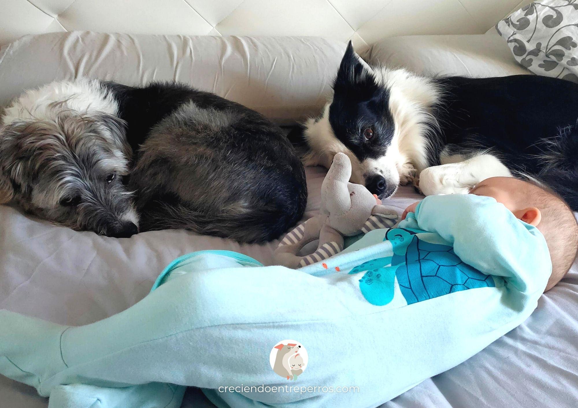 perro y bebé durmen juntos misma cama colecho crianza multiespecie creciendo entre perros