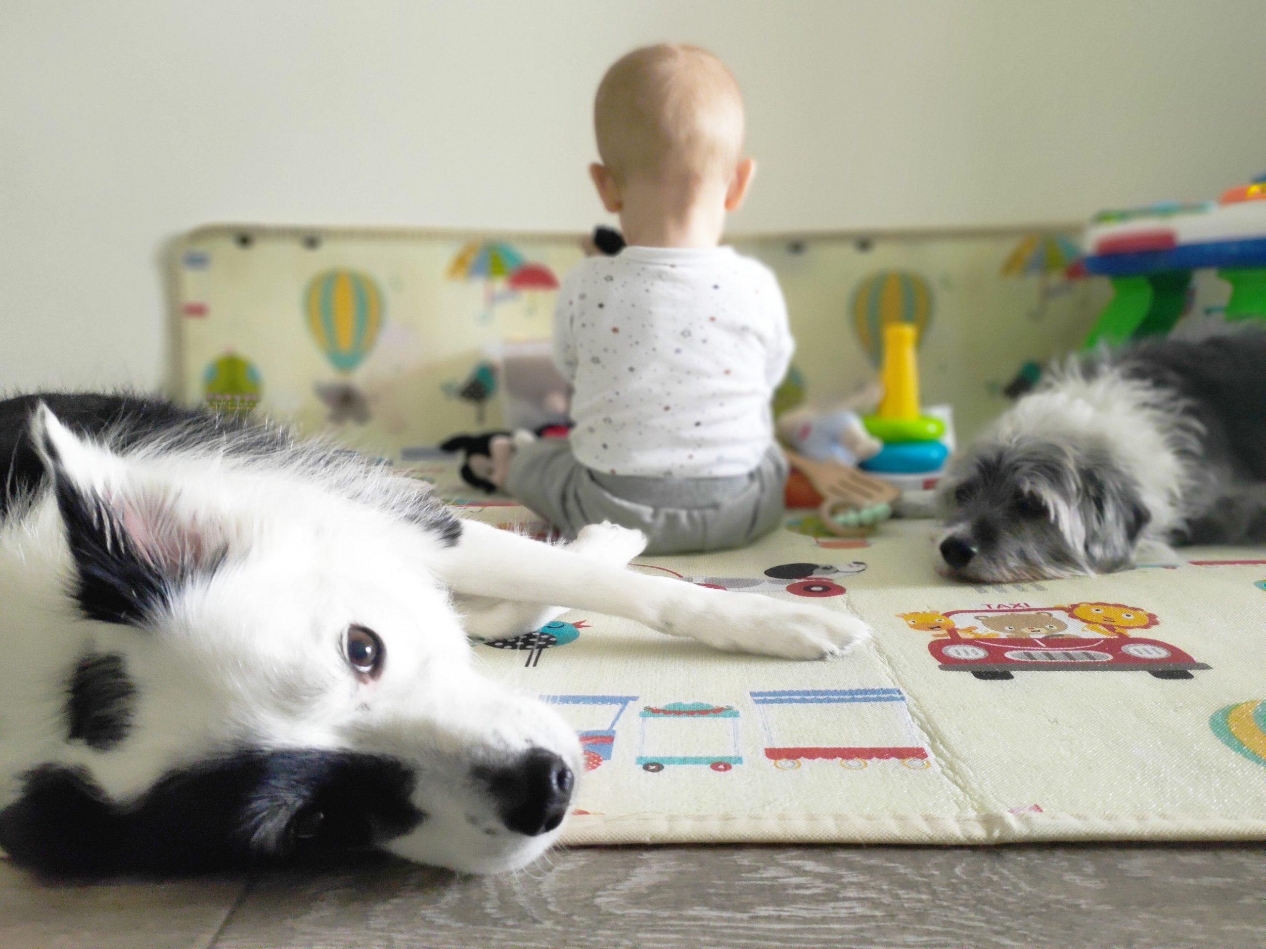 perros y niños convivencia tranquila