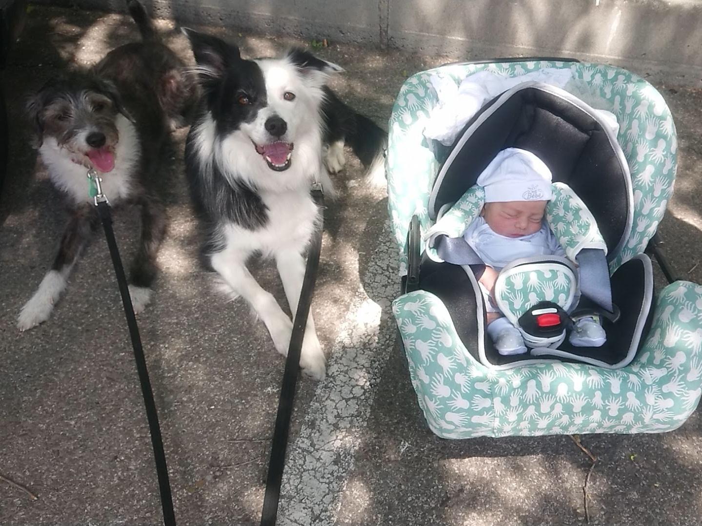presentación perros y recien nacido creciendo entre perros tamara hernán