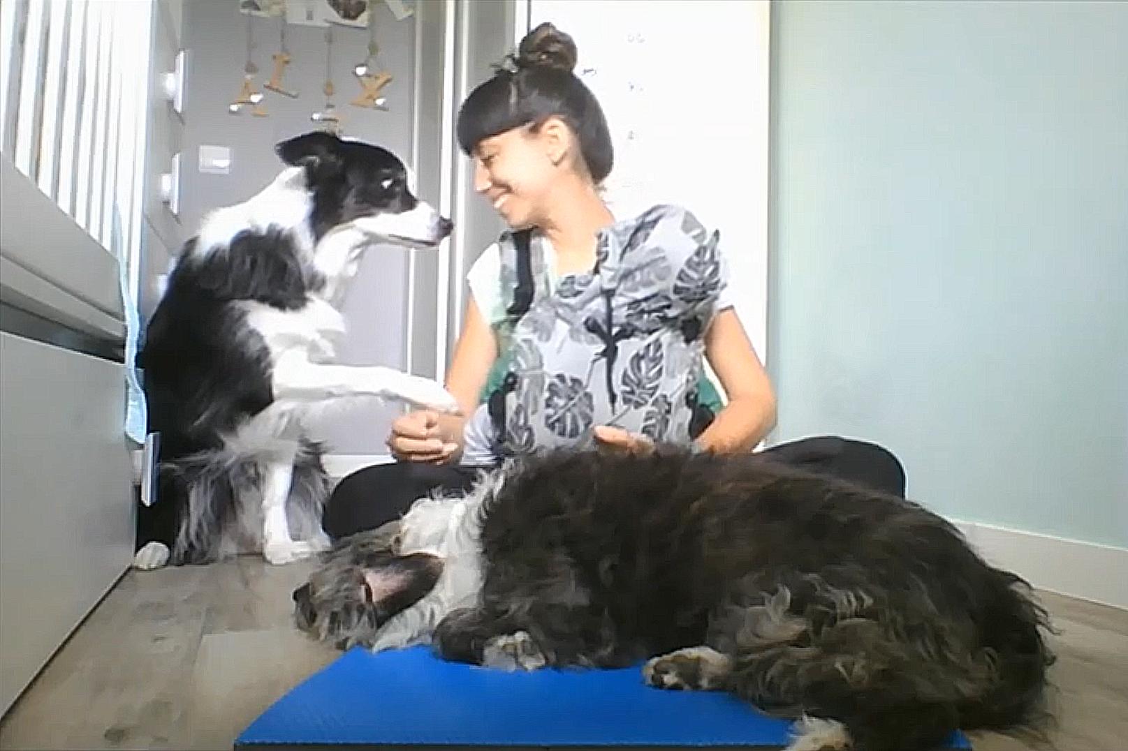 la habitación del bebé y el perro