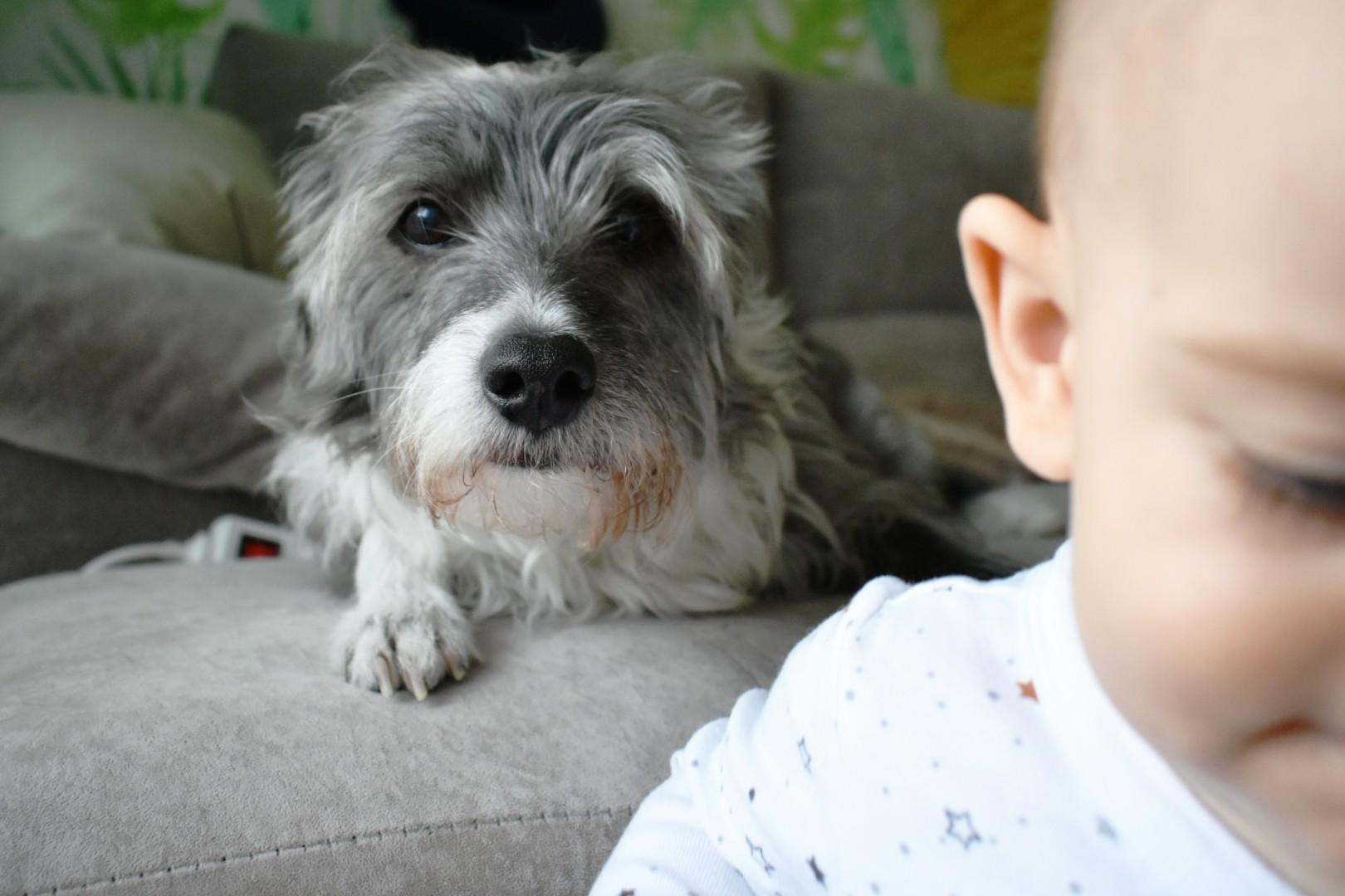 supervisión perro/bebe