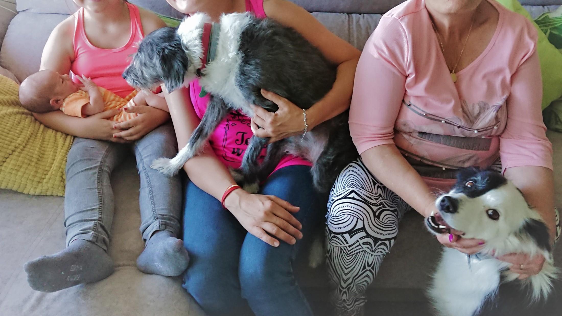 visitas al recién nacido cuando hay perros